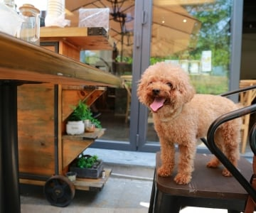 Dog on a patio chair