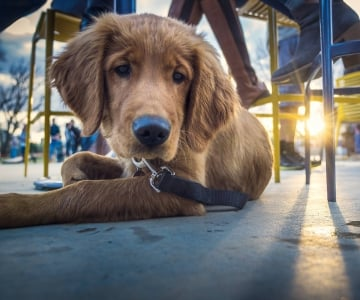 dog on an outdoor patio